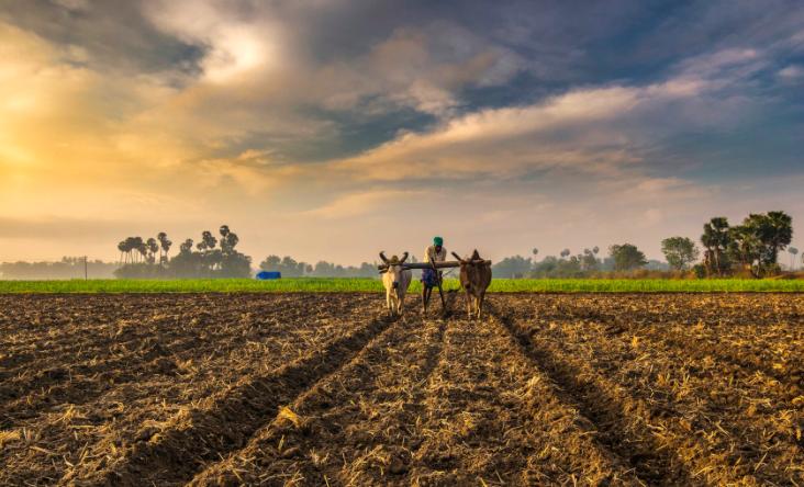 कृषि, खेती और संबद्ध गतिविधियों को लॉकडाउन से मिली मुक्ति
