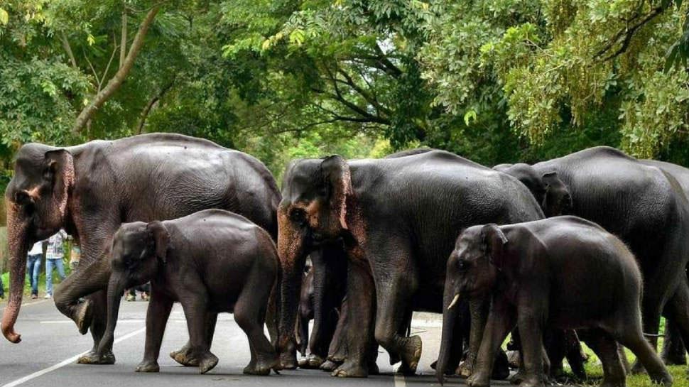 छत्तीसगढ़: कोरिया में हाथियों का आतंक