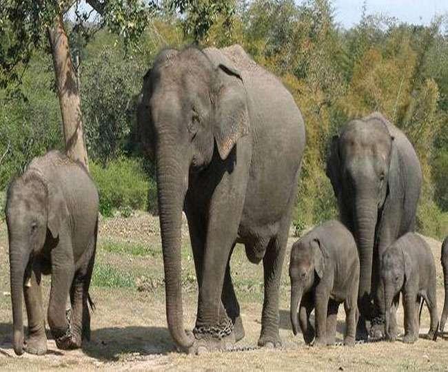 घंटों युवक के शव के सुढ में लेकर भटकता रहा जंगली हाथी: झारखंड