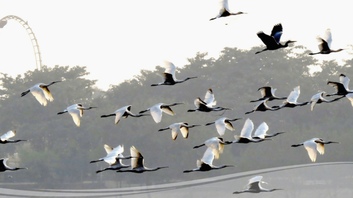 bird-sanctuaries-in-uttar-pradesh
